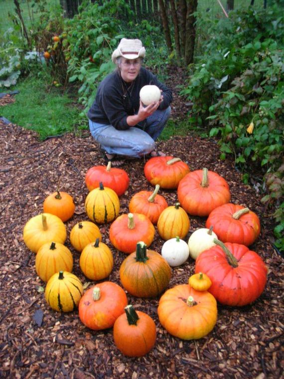 Lisa Braddock and the pumpkins